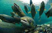 Central Attractions - Salmon Capital of the World